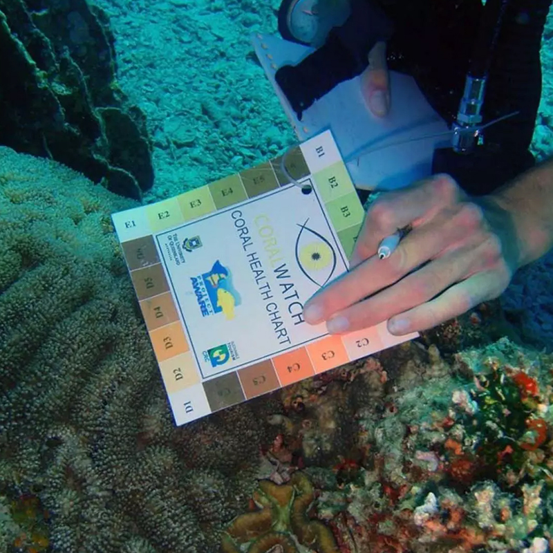 Dive with me - Corala Reef Conservation Diver