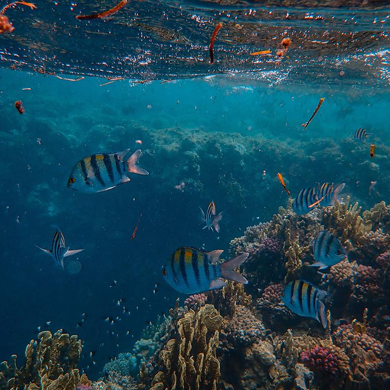 Dive with me - PADI AWARE (Fish Identification)