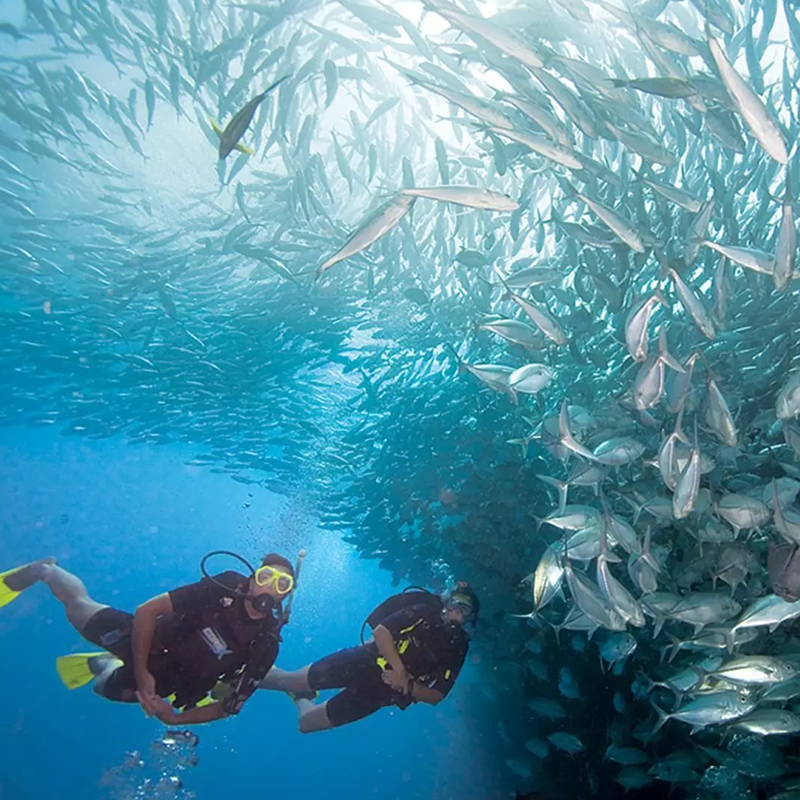 Dive with me - PADI Discover Local Diving
