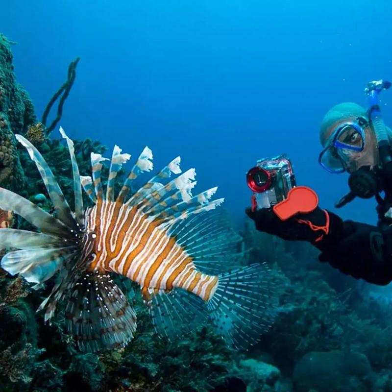 Dive with me - PADI Distinctive specialties