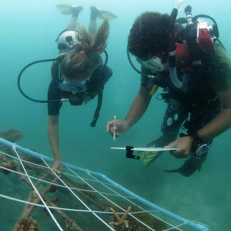 Dive with me - Padi Project aware