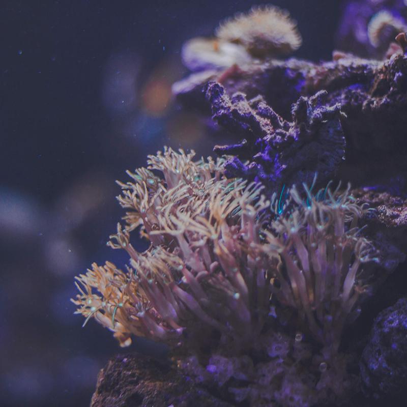 Dive with me - PADI Underwater Naturalist