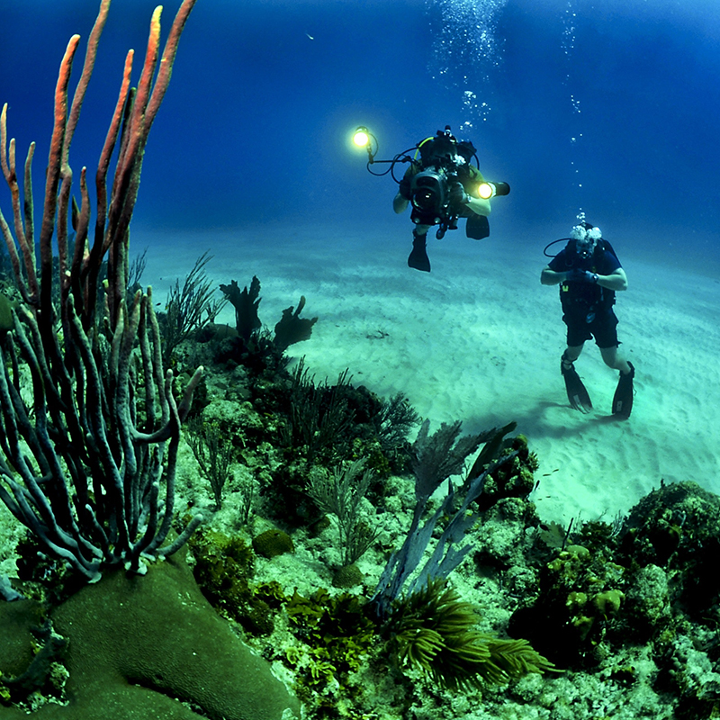 DIVE WITH ME: Advance Group class