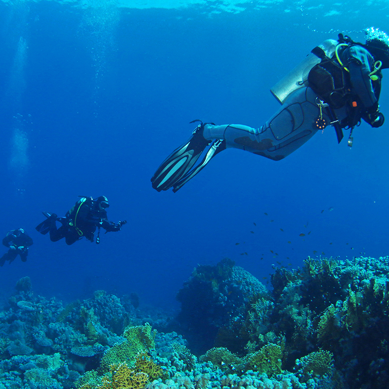 DIVE WITH ME: Open water Group Class